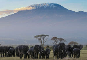 Lemosho Route 9 Days Climb Mount Kilimanjaro