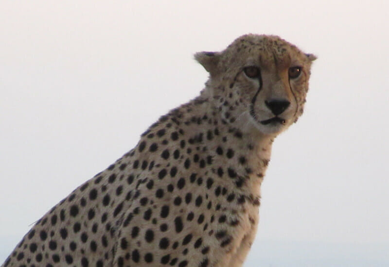 Tarangire, Serengeti and Ngorongoro Crater Safari 6 Days