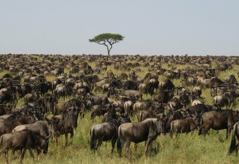Northern Tanzania Safari 8 Days