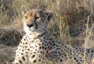 Serengeti Camping Safari 6 Days