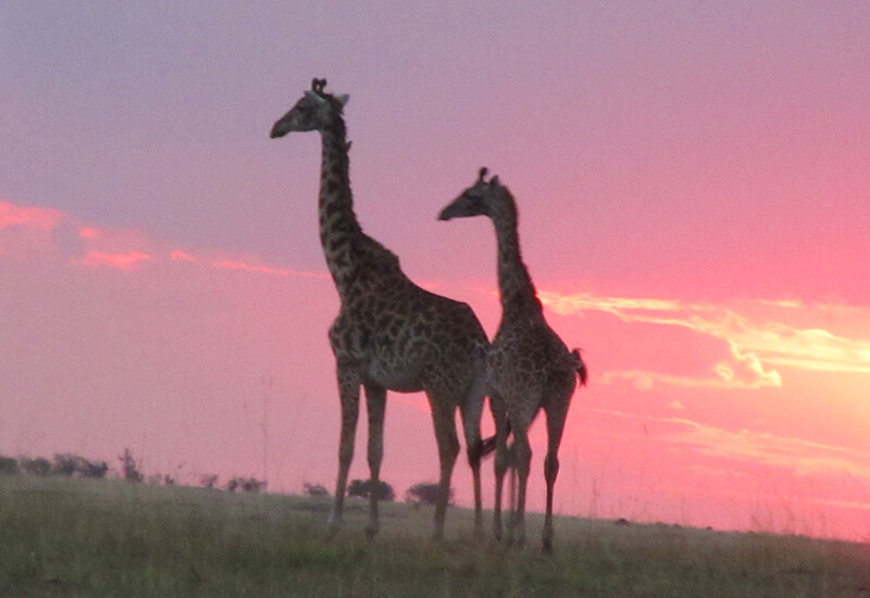 Tanzania Walking Safari 9 Days