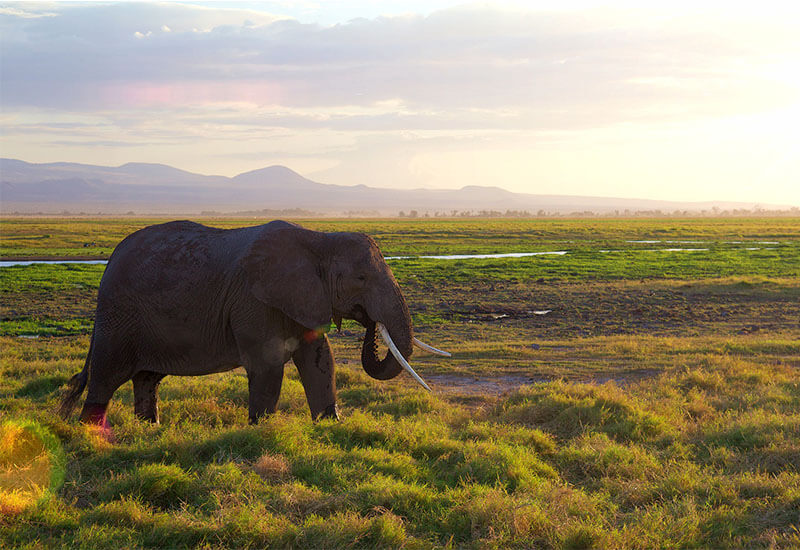 5 Things To Do In Kilimanjaro National Park