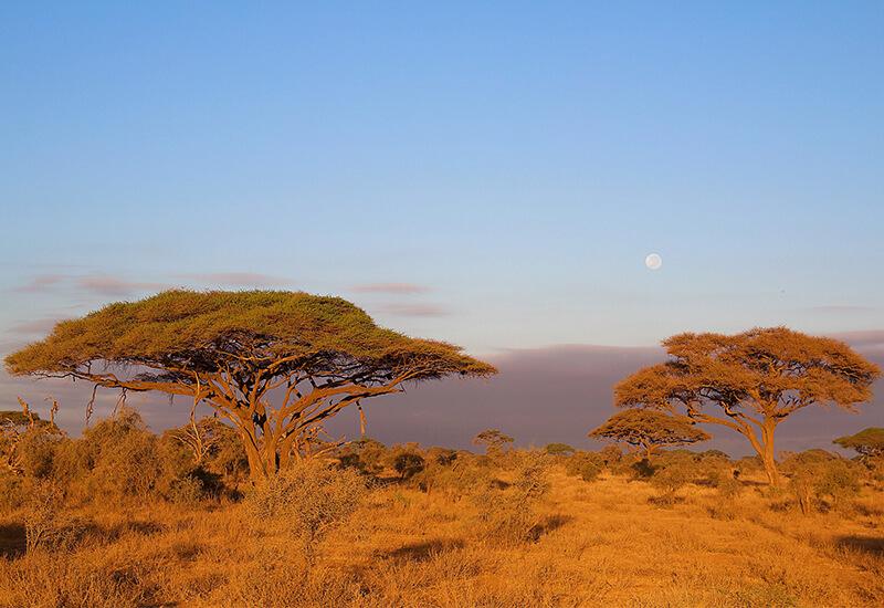 Why You Need Cooks On Kilimanjaro 2